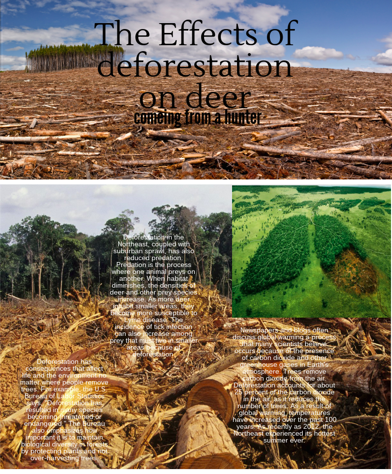 deforistation letter Deforestation is forest loss through urban sprawl, land clearing for agriculture, wildfire, disease or timber harvest the united states went through a period of intense deforestation between 1600.