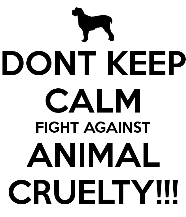 animal cruelty must stop by aisosa letters to the next president  animal cruelty must stop
